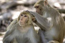 Monkeys at Koh Phanak